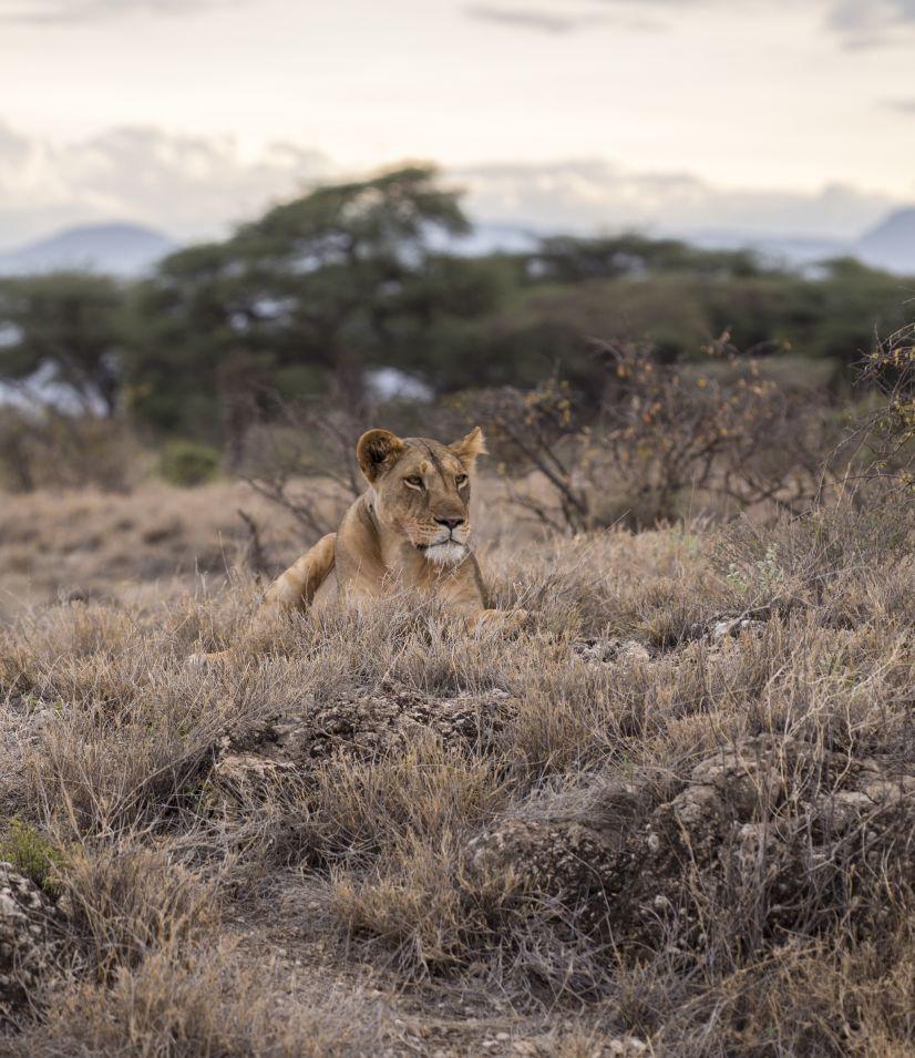 SWAZILAND – KRUGER