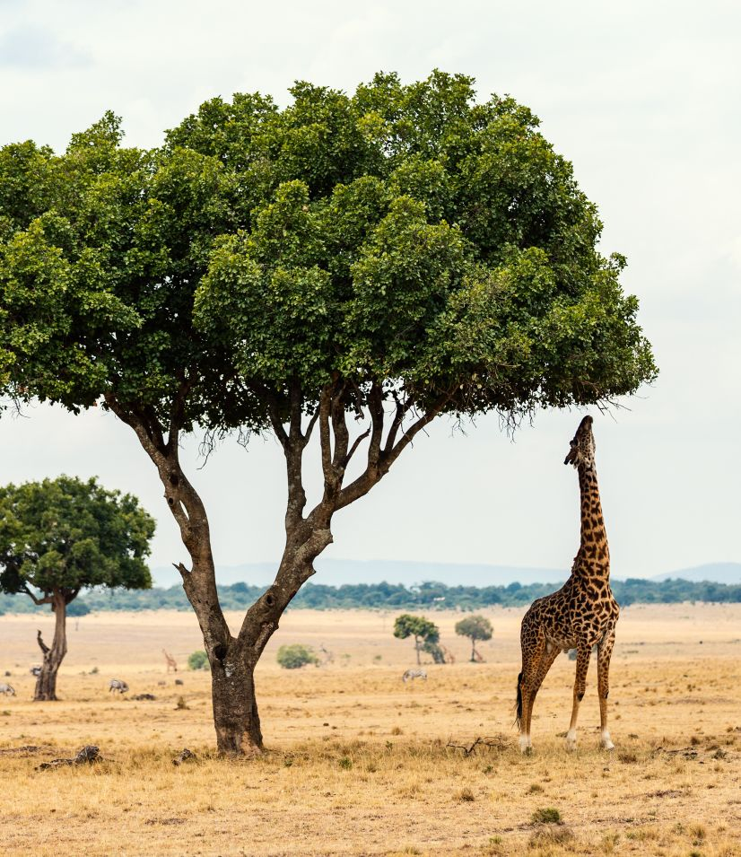 PARC NATIONAL DU SERENGETI